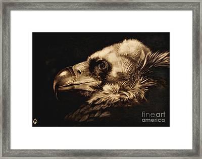 Avvoltoio Framed Print by Ilaria Andreucci