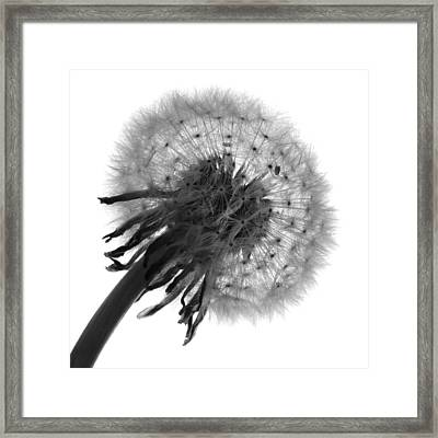 Await The Breeze Framed Print by Terence Davis