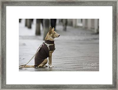 Awaiting His Master Framed Print