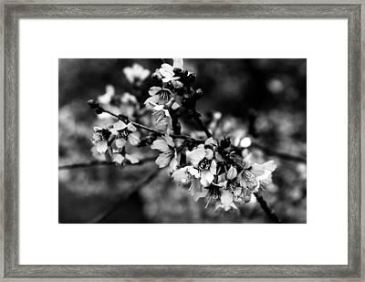 Awake Framed Print by Angie Tirado