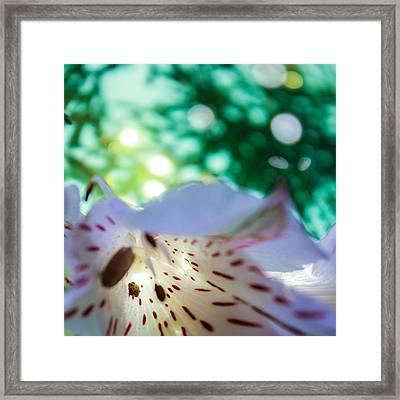 Framed Print featuring the photograph Awaken by Bobby Villapando