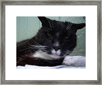 Awakened Framed Print by Ken Day