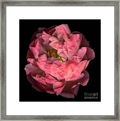 Awakening Framed Print by Christian Slanec
