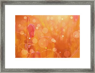 Awakening In A Wonder World - Snake's Head/ Chess Flower  Framed Print