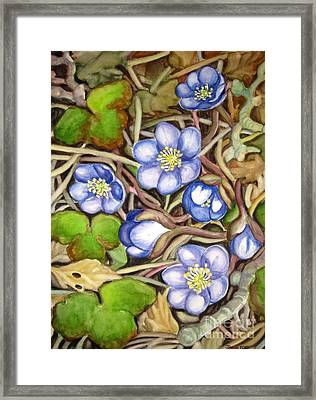 Awakening Of The Wild Anemone  Framed Print