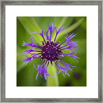 Framed Print featuring the photograph Awakening by Patrick Downey