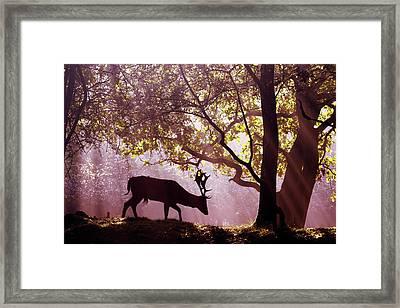 Awakenings -fallow Deer Framed Print