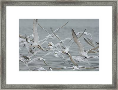 Away  Framed Print by Fraida Gutovich