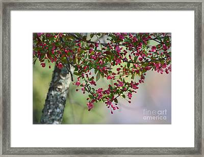 Framed Print featuring the photograph Awe... Spring by Brenda Bostic