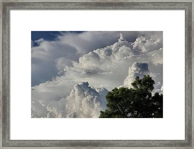 Awesome Cloulds And A Pine Tree Framed Print by Maris Salmins