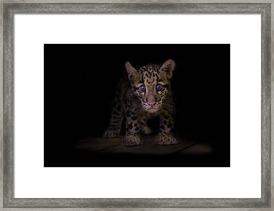 Awestruck Framed Print by Ashley Vincent