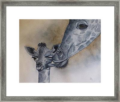 Baby And Mother Giraffe Framed Print