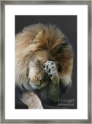Awwwww.....  V2 Framed Print