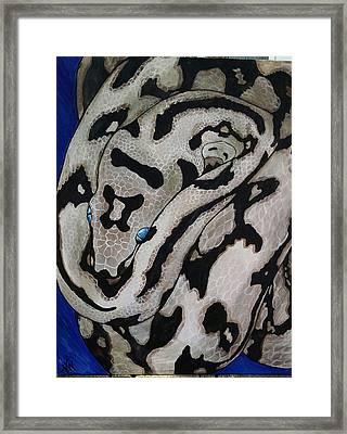 Axanthic Jaguar Carpet Python Framed Print by Nikki Winterberg - Candy Neuron