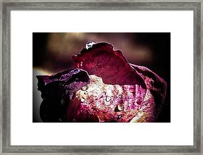 Axl Rose Framed Print by Karen Scovill