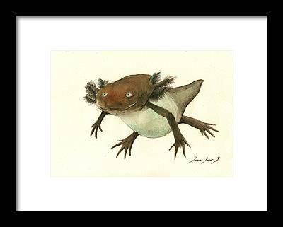 Salamanders Framed Prints