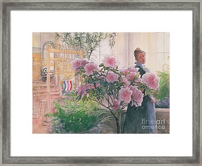 Azalea Framed Print by Carl Larsson