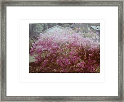 Azalea Framed By Roof Framed Print by Hal Newhouser