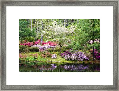 Azalea Heaven Framed Print by Eggers Photography
