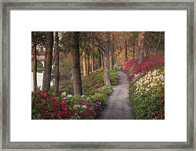 Azalea Hill Path Framed Print