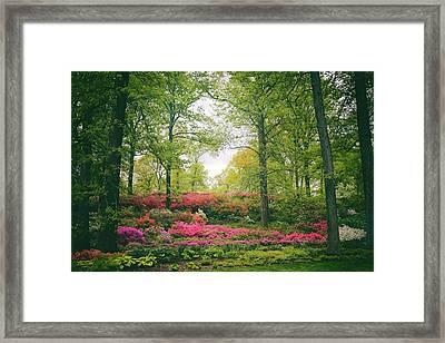 Azalea Hillside Framed Print by Jessica Jenney