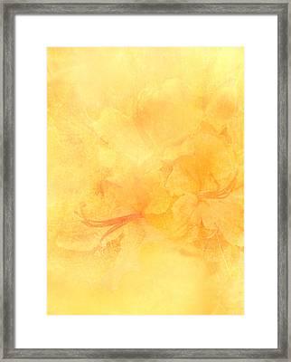 Azalea Impressions Framed Print