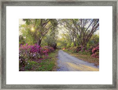 Azalea Lane By H H Photography Of Florida Framed Print by HH Photography of Florida