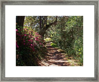 Azalea Path  Framed Print by Bob Johnson