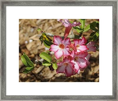 Azalea Pink I Framed Print
