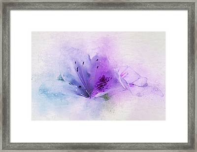 Azalea Splash 2 Framed Print by Terry Davis