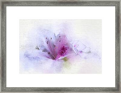 Azalea Splash Framed Print