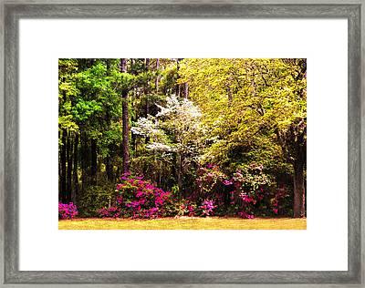 Azaleas Blooming Framed Print by Terry Shoemaker