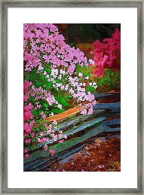 Framed Print featuring the photograph Azaleas Over The Fence by Donna Bentley