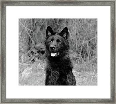 Framed Print featuring the photograph Aziza  by Sandy Keeton