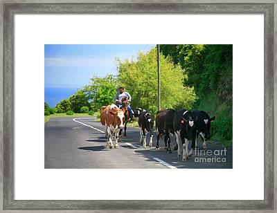 Azorean Farmer Framed Print by Gaspar Avila