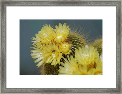 Aztec Bee Framed Print