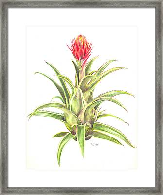 Aztec Gold Framed Print by Penrith Goff