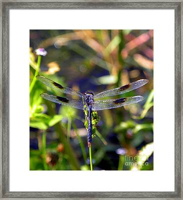 Azure Dragonfly Framed Print