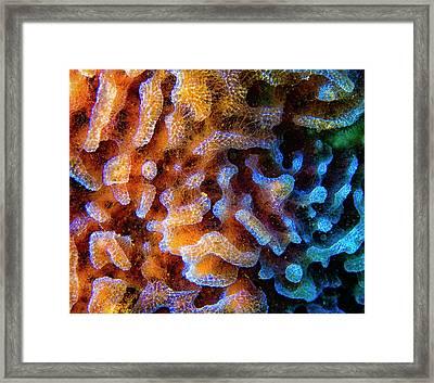 Azure Vase Sponge Close Up Framed Print by Jean Noren
