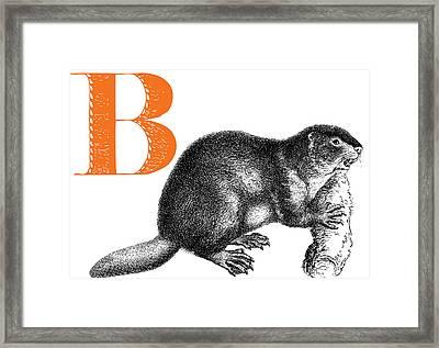 B Beaver Framed Print