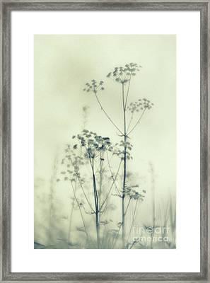 Wild Flowers 3 Framed Print