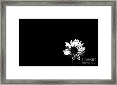 B/w Flower  Framed Print by Juls Adams