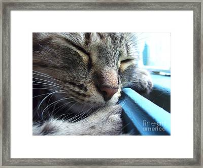 Babaloe Blue Framed Print by Barbara Marcus