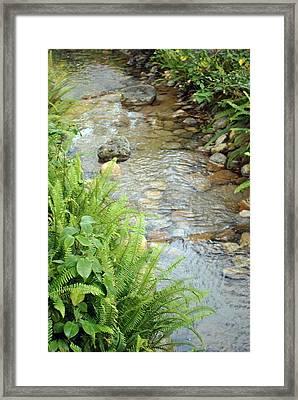 Framed Print featuring the photograph Babble Brook by Amanda Eberly-Kudamik