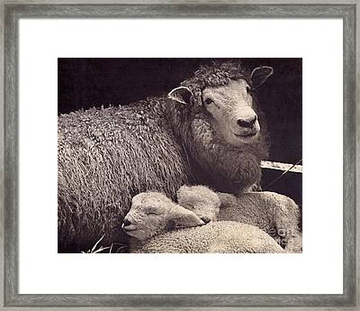 Babes In A Manger Framed Print