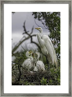 Babies In The Nest Framed Print