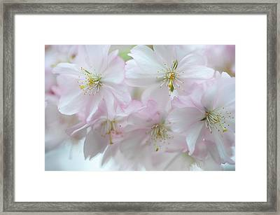 Babies Of Spring Framed Print by Jenny Rainbow