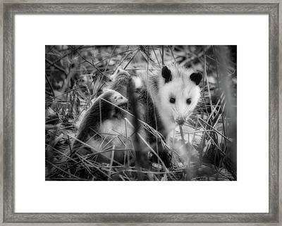Babies On Board Framed Print by Bob Orsillo