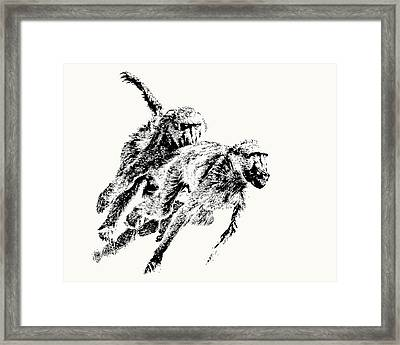 Baboon Chase Action Framed Print