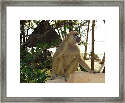 Baboon Sits Guard Framed Print